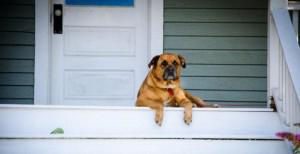 Dog-on-Porch-300x154