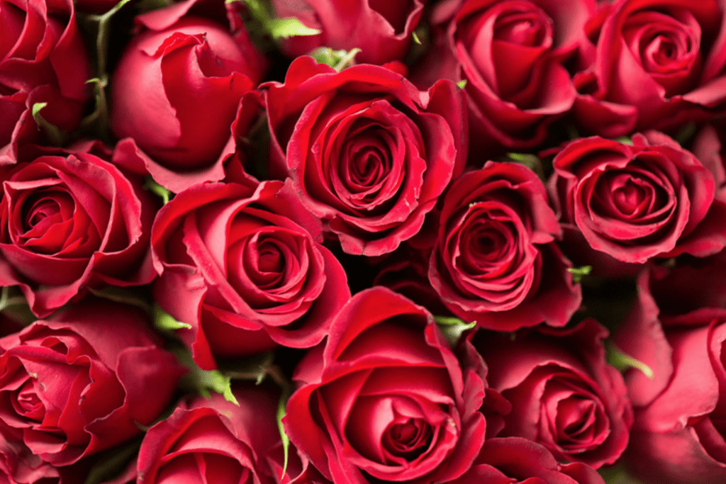 Red Roses to Spice Up Your Bedroom