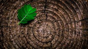 Wood Element - Tree Ring